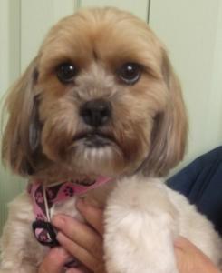 Sophie | 3yr | Terrier