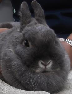 Thumper | 3y | Dwarf Rabbit