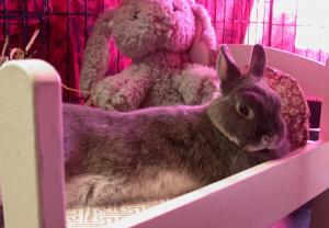 July 2017 - Thumper