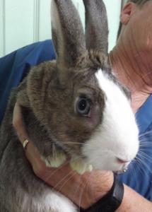 Jack | 8mth | Dwarf Rabbit